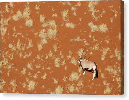 Namib Desert Canvas Print - Namibia, Namib-naukluft Park, Sossusvlei by Jaynes Gallery