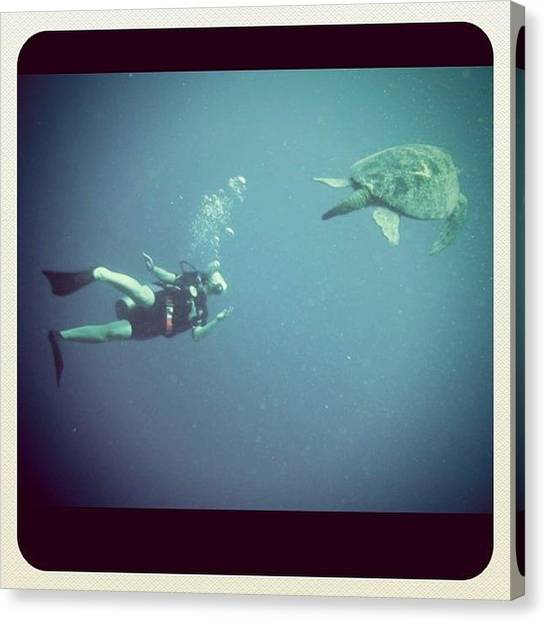 Scuba Diving Canvas Print - Nancy And A Really Old Green Turtle by Kim Max
