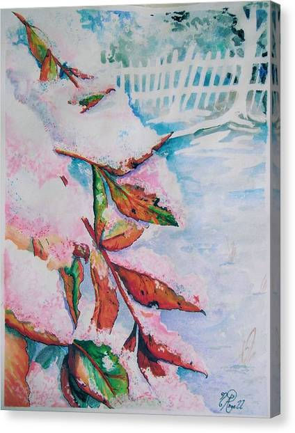 Nandina In Snow Canvas Print