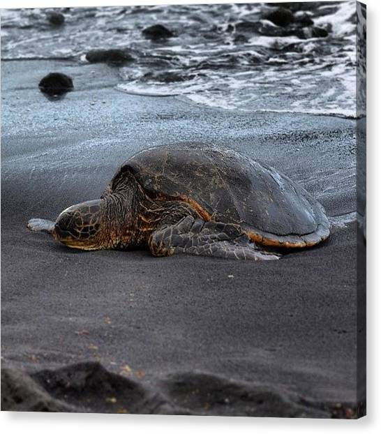 Hawaii Canvas Print - Nap Time.... #instagood #blacksandbeach by Brian Governale
