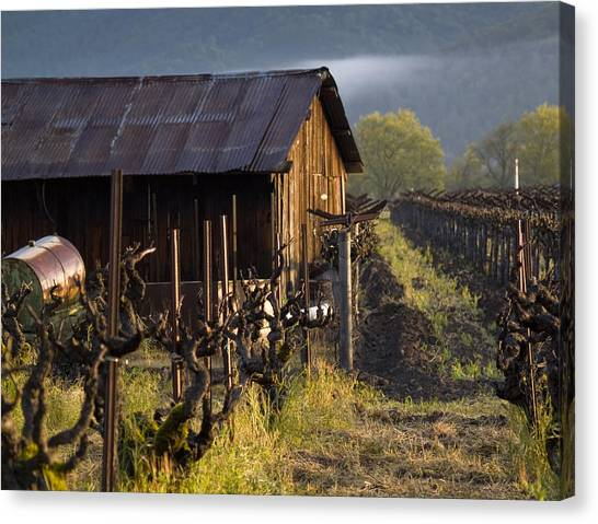 Napa Morning Canvas Print