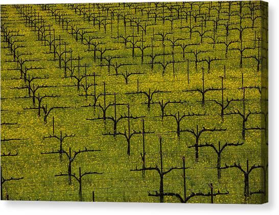 Mustard Canvas Print - Napa Mustard Grass by Garry Gay