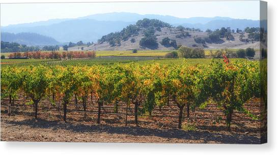 Napa Valley California Vineyard In Fall Autumn Canvas Print
