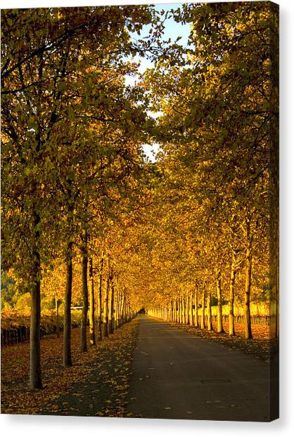 Napa Valley Fall Canvas Print