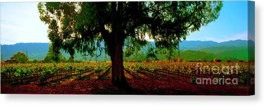 Napa Valley Winery Roadside Canvas Print