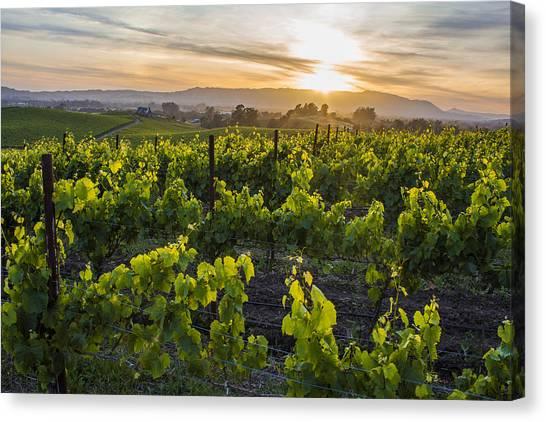 Napa Valley Sunset  Canvas Print