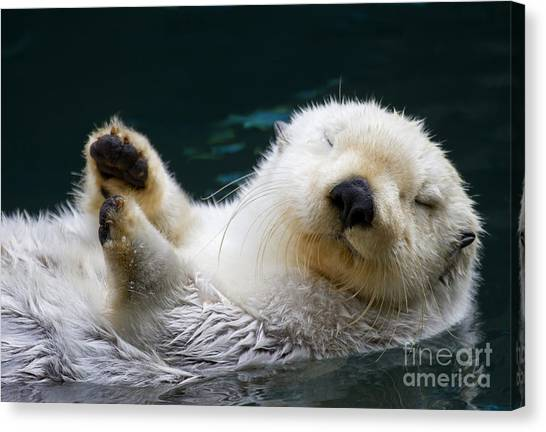 Otters Canvas Print - Napping On The Water by Mike  Dawson