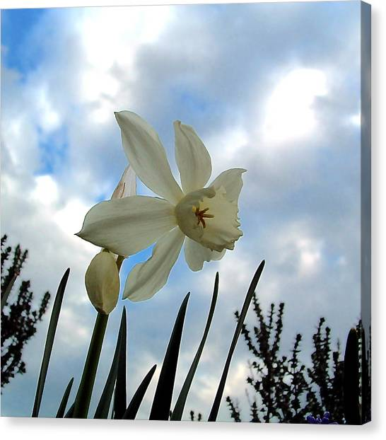 Narcisse Canvas Print