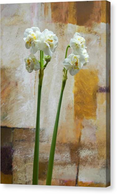 Bridal Canvas Print - Narcissus And Artwork by Lutz Baar