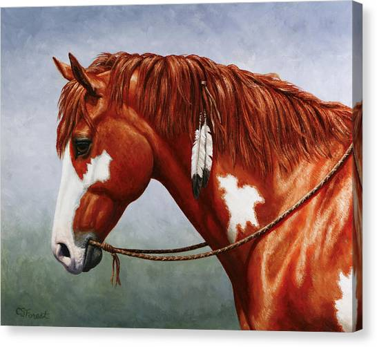 War Horse Canvas Print - Native American Pinto Horse by Crista Forest