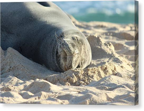 Bases Canvas Print - Native Hawaiian Monk Seal by Michael Kim