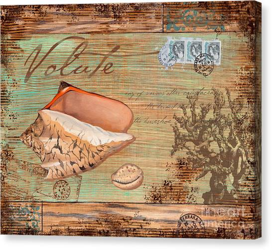 Conch Canvas Print - Natura Volute by Paul Brent