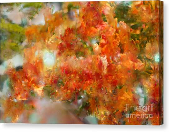 Natural Abstractions #12 The Orange Tree Canvas Print