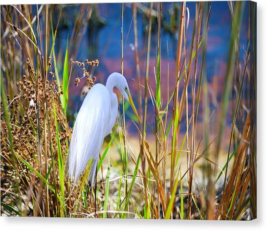 Herons Canvas Print - Natural Beauty by Adele Moscaritolo