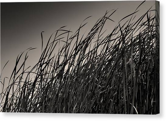Natural Compromise Canvas Print