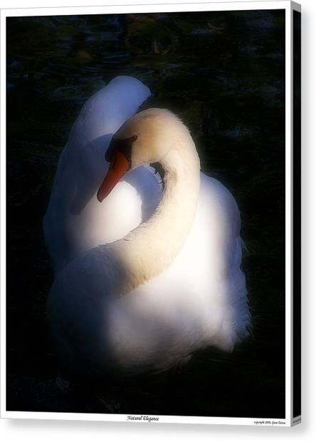 Natural Elegance Canvas Print