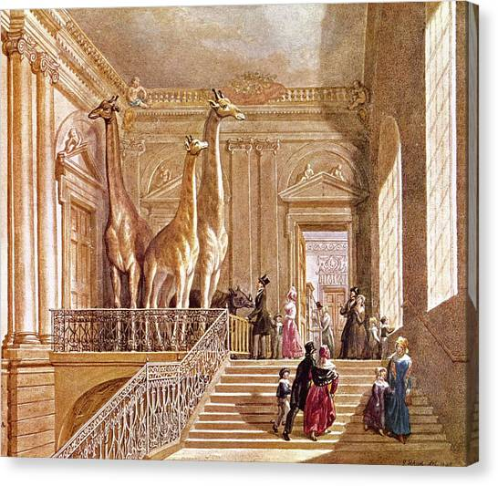 The British Museum Canvas Print - Natural History At Montagu House by Natural History Museum, London/science Photo Library