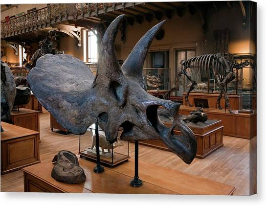 Triceratops Canvas Print - Natural History Museum by Pascal Goetgheluck/science Photo Library