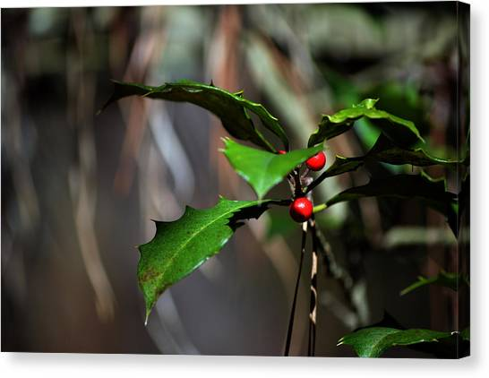 Natural Holly Decor Canvas Print by Bill Swartwout Photography