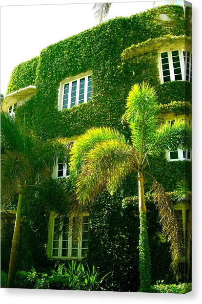 Natural Ivy House Canvas Print