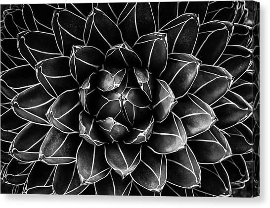 Symmetrical Canvas Print - Natural Math by Monica Valentina Patrascoiu