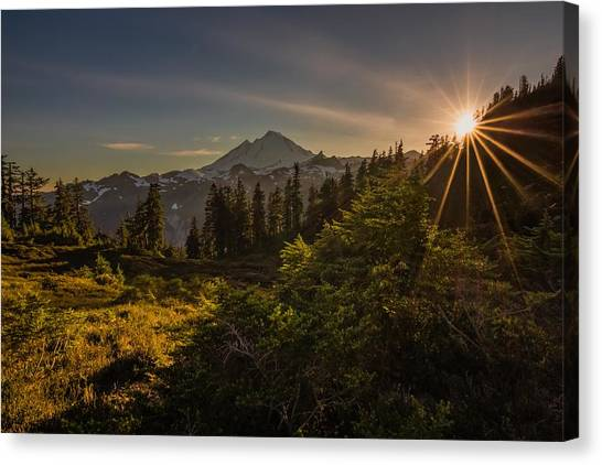 Nature Beams Canvas Print