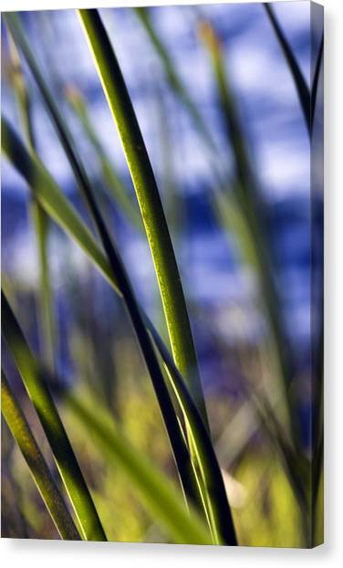 Nature Bokeh Canvas Print by Karim SAARI