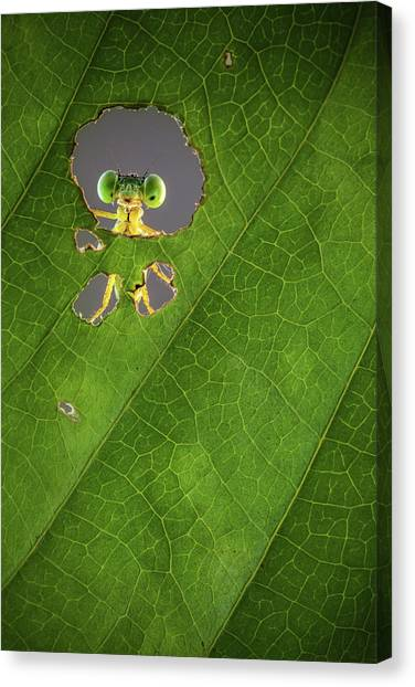 Bug Canvas Print - Nature Frame by Wilianto