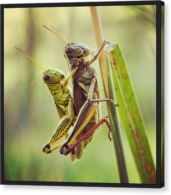 Insects Canvas Print - Nature Is Sexy.  by Heidi Hermes