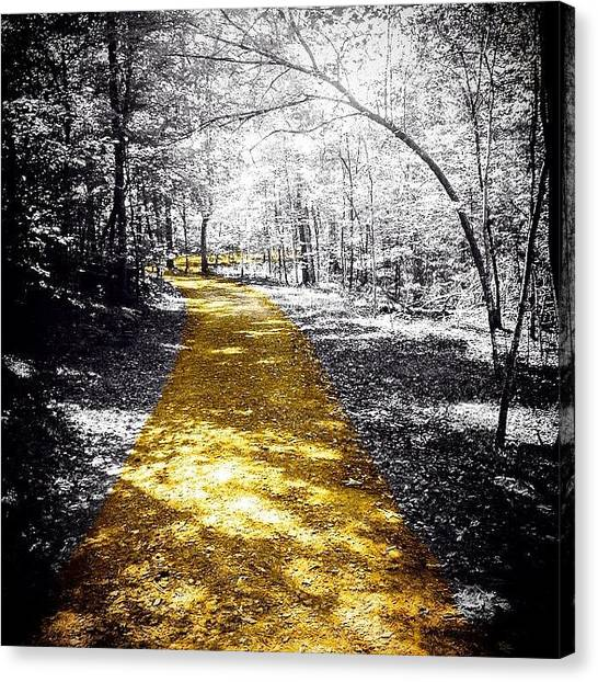 Gold Canvas Print - #nature #outdoors #trail #sunshine by Jason Montgomery
