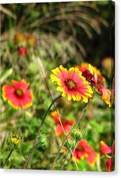 Nature Canvas Print by Peggy Burley