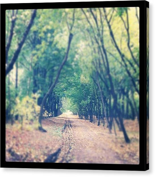 Portal Canvas Print - #nature #trees #beauty #portal #fantasy by Alissia Maria Svergun