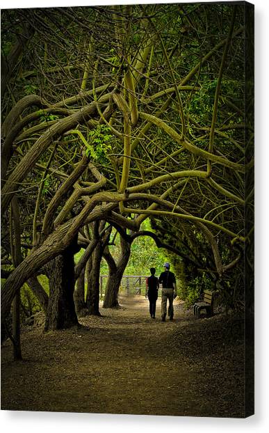 Nature Walk Canvas Print