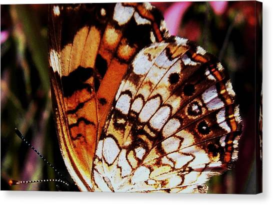 Natures Abstracts Butterfly Wings 005 Canvas Print by George Bostian