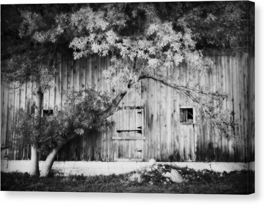 Natures Awning Bw Canvas Print