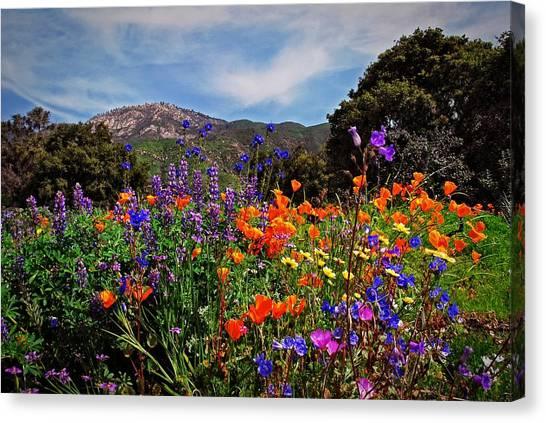 Nature's Bouquet  Canvas Print