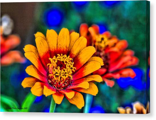Natures Eye Candy Canvas Print by Rebecca Adams