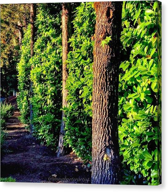Sunny Canvas Print - Natures Fence by Anna Porter