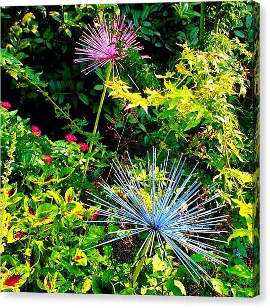 South Carolina Canvas Print - Natures Flowerworks  by Gina ODonoghue
