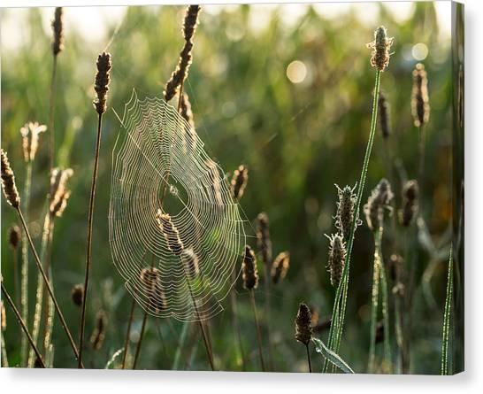 Nature's Intricacies Canvas Print