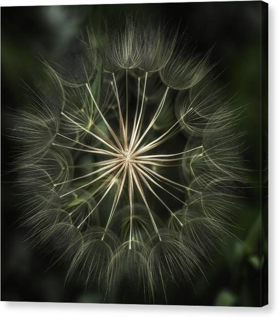 Nature's Kaleidoscope  Canvas Print