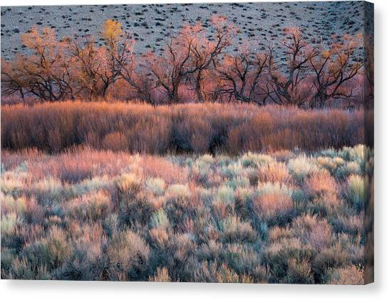 Bishops Canvas Print - Nature's Paintbrush by Mike Hitchner