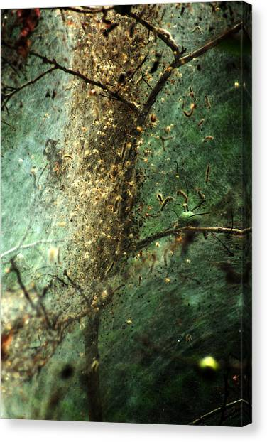 Natures Past Captured In A Web Canvas Print