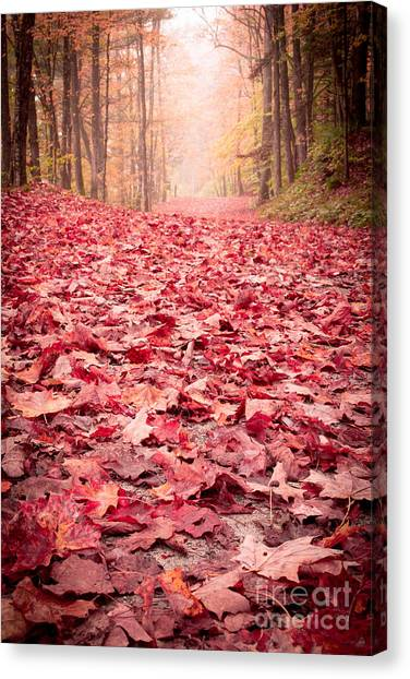 New Hampshire Canvas Print - Nature's Red Carpet Revisited by Edward Fielding