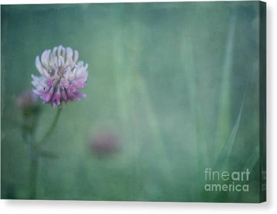 Clover Canvas Print - Natures Scent by Priska Wettstein