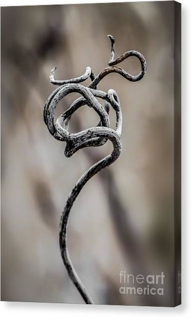 Natures Sculpture Canvas Print