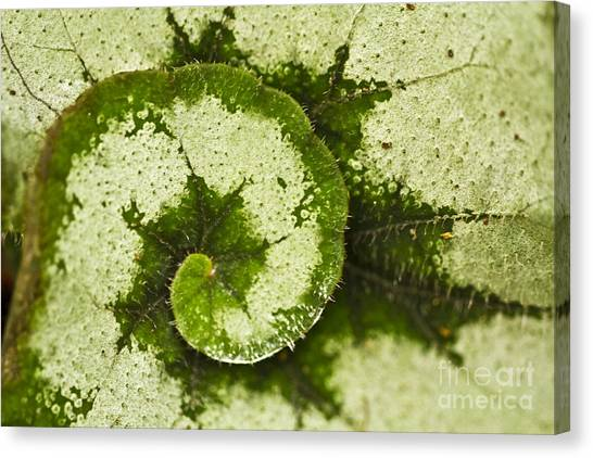 Natures Spiral Canvas Print