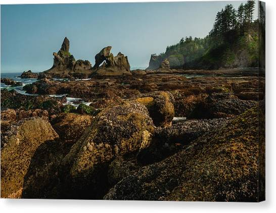 Natures Way Canvas Print