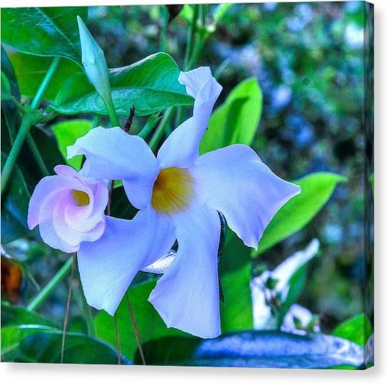 Flower 14 Canvas Print