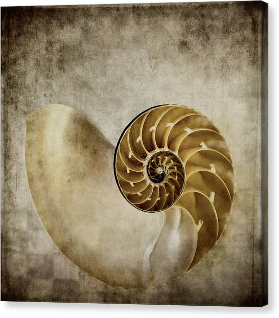 Fibonacci Canvas Print - Nautilus Shell by Carol Leigh